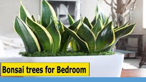 best plants for bedroom bonsai trees for bedroom best plants for bedroom to help you