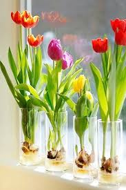 how to grow bulbs in a glass vase glass flower and decorative rocks