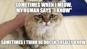 Cat Facts Meme - cat trivia test your knowledge to see if you re a cat person