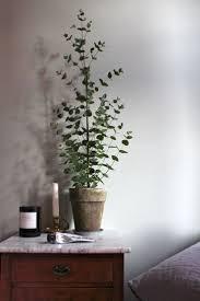 best indoor house plant best indoor trees myfavoriteheadache com myfavoriteheadache com