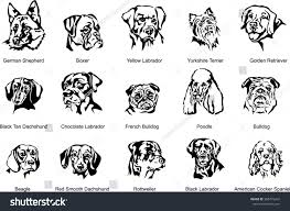 boxer dog jaw face dog breed dog vector image stock vector 305479247 shutterstock