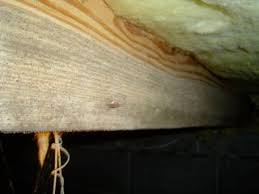 3 reasons your crawl space has high humidity u0026 grows stuff