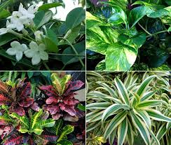 10 easy care plants for house plants archives naturebring