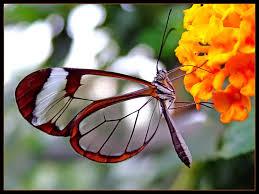 95 ideas kids butterfly pictures on emergingartspdx com