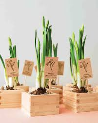 Miniature Indoor Plants by Floral And Plant Favors To Diy For Your Big Day Martha Stewart