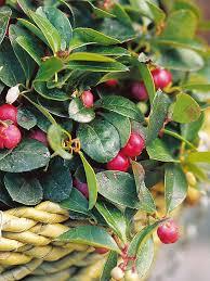 winter berries hgtv