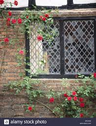 red climbing roses against leaded glass window at penshurst place