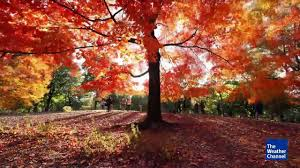 Foliage Map When Will Fall Foliage Peak In Your Area The Weather Channel