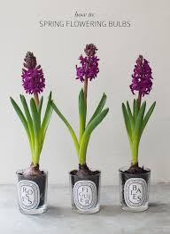 how to flowering bulbs a pair a spare