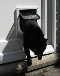 Cat Door For Interior Door Interior Cat Door For Walls Lets Your Favorite Pet Coming In And