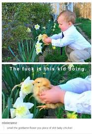 Meme Florist - flower memes best collection of funny flower pictures