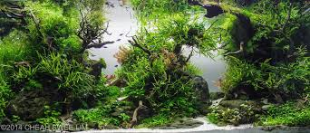 Aquarium Aquascapes Easiest Freshwater Plants For Beginners Aquarium Info