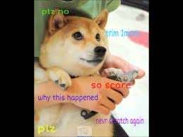 Shiba Meme - meme debauchery soup