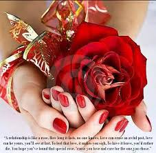 Flower And Love Quotes - red rose love quotes by quotesgram places to visit pinterest