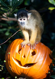 7 hungry zoo animals celebrating halloween photos