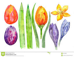 Decorative Flowers by Watercolor Decorative Flowers Tulips And Leaves Watercolor