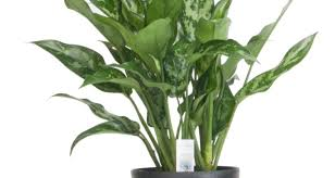 plant plants indoor amazing foliage house plants 22 ways to