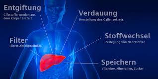 leberschwäche symptome leberfunktionsstörungen definition und symptome