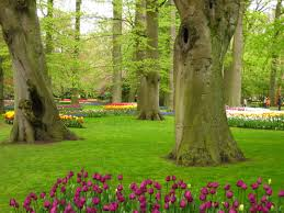 flower garden in amsterdam keukenhof dutch tulip festival spring garden conscious travel