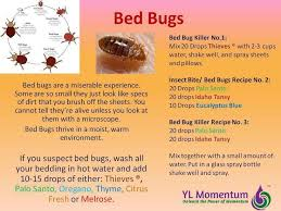 73 best bed bugs images bed bug remedies natural