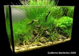 a little aquascape with chilean native species page 3