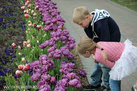 tulip festival at thanksgiving point 2017 lovebugs and postcards