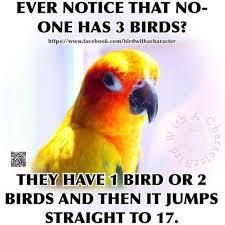 Parrot Meme - memes of parrots of best of the funny meme