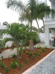 outdoor palm tree l small chagne palm tree for small front yard garden small