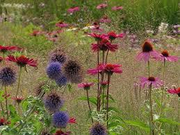 school annuals online online perennial course garden design