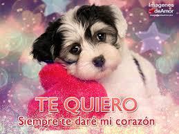 imagenes con frases de amor super tiernas 15 imágenes de perritos con frases de amor súper tiernas