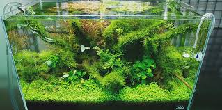 Aquascaping With Driftwood Nature Aquariums And Aquascaping Inspiration