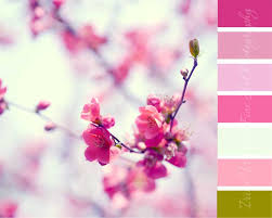 color palette for your home decor inspired by pink quince flower
