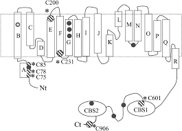 writing an abstract for a paper evaluation of the membrane spanning domain of clc 2 biochemical download figure