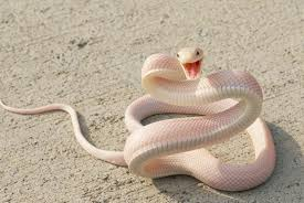 amazing pictures of snake animal 19 incredible photos
