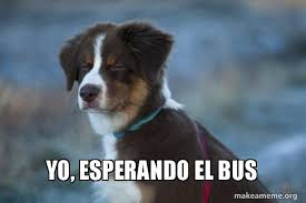 Yo Dog Meme - yo esperando el bus unsure dog make a meme