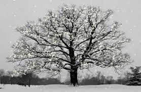 snowy tree by rivele on deviantart