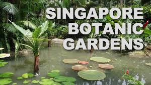 Botanical Gardens In Singapore by Singapore Botanic Gardens Youtube