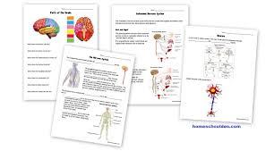 Geologic Time Scale Worksheet Nervous System Worksheets Free Homeschool Den