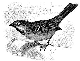 the lessons of a bird a short story the unbounded spirit