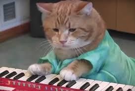 Keyboard Cat Meme - bento the keyboard cat internet famous feline dies at age 9