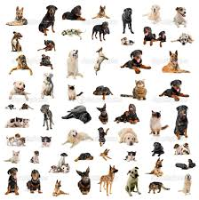 Small House Dogs Photos Types Of Breeds Dogs Dog Chart Small House Breed Litle Pups