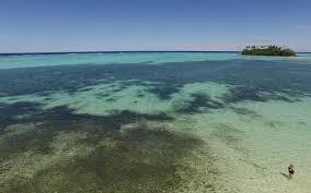 algar owner algae bloom in cooks lagoon not business owner fiji one