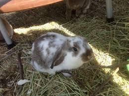first rabbits gardnmama