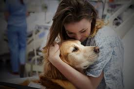 Living With A Blind Dog About The Alliance Of Therapy Dogs A National Therapy Dog
