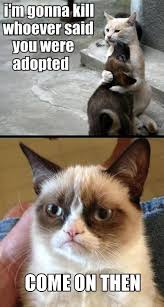 Grumpy Cat Monday Meme - funny animals stories funny grumpy cat memes