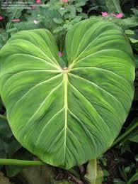 Tropical Plants Images - plants melitasart blog inspiration pinterest tropical