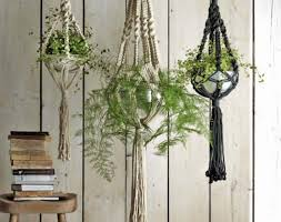 ornamental home design inc plant cool indoor plants decoration ideas home design new