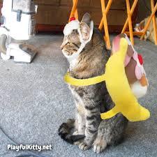 cinco u0026 manna u0027s halloween costume face off playful kitty