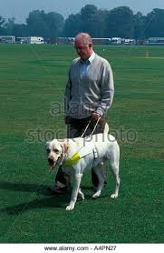 Blind Dog And His Guide Dog Blind Man And His Dog Stock Photos U0026 Blind Man And His Dog Stock