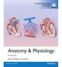 Human Anatomy And Physiology Marieb 7th Edition Human Anatomy By Marieb Elaine N Wilhelm Patricia Brady